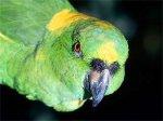 В Мюнхене украли обругавшего мэра попугая